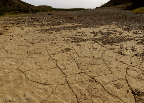Rio Grande floodplain, cracked and dry.  Big Bend, TX.