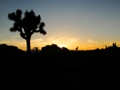 Boy Scout Trail. Joshua Tree National Park, CA.