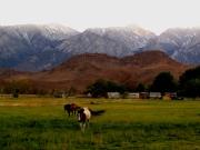 Horse friends. Lone Pine, CA.